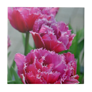 Pink parrot tulips small square tile