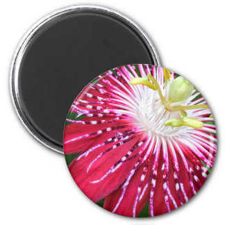 Pink Passion Flower Round Magnet