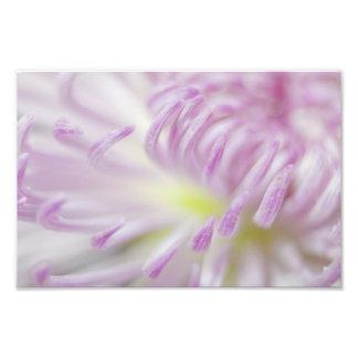 Pink Pastel Flower Photograph