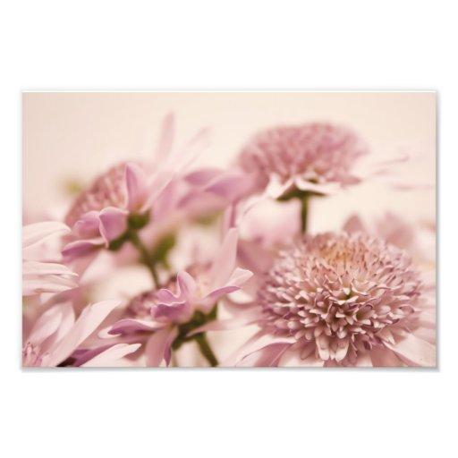 Pink Pastel Wildflowers Photograph