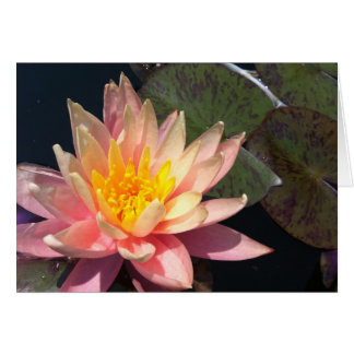 Pink & Peach Water Lily Card
