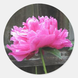 Pink Peony Bloom Round Sticker