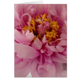 Pink Peony Flower Blank Greeting Card