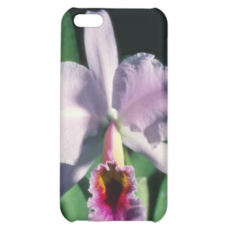 Pink Perci-Valiana (Cleya) flowers Cover For iPhone 5C