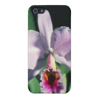 Pink Perci-Valiana (Cleya) flowers Cover For iPhone 5