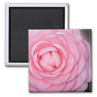 Pink Perfection Camellia Square Magnet