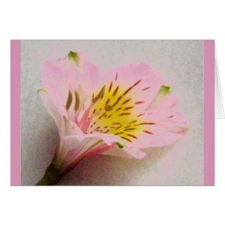 Pink Peruvian Lily - Blank Inside Greeting Card