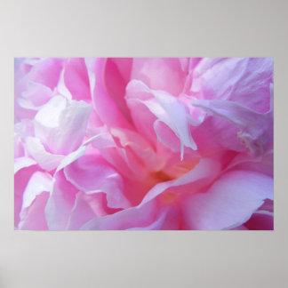 Pink Petals Peonie Poster