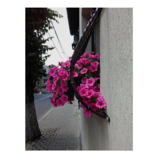 Pink Petunia Blossom Poster