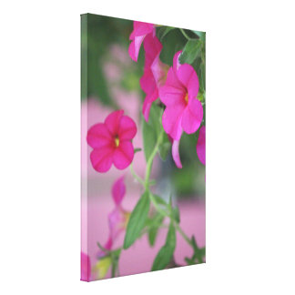 Pink Petunia Canvas Art Print