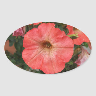 Pink Petunia Oval Sticker