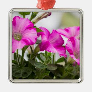 Pink Petunia Passion Metal Ornament