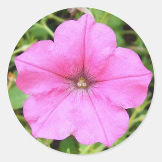 Pink Petunia Round Sticker
