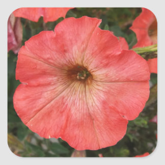 Pink Petunia Square Sticker
