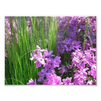Pink Phlox and Grass Summer Flowers Photograph
