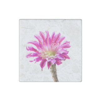 Pink piazza in bloom stone magnet