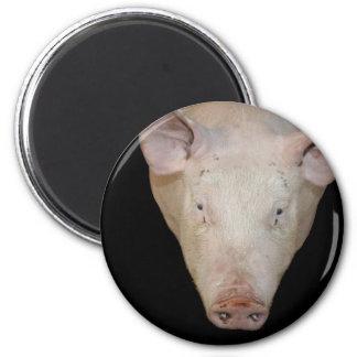 Pink pig head against black background fridge magnets