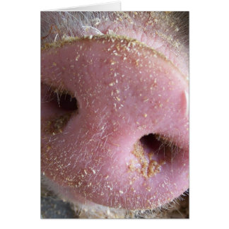Pink Pig nose close up photograph Card