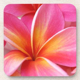 Pink Plumeria Frangipani Hawaii Flower Hawaiian Coaster