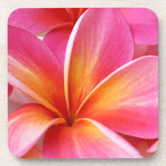 Pink Plumeria Frangipani Hawaii Flower Hawaiian Drink Coaster