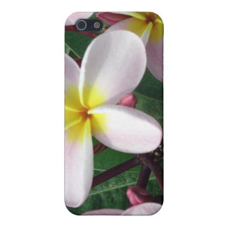 Pink Plumeria iPhone Case Cover For iPhone 5/5S