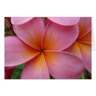 Pink Plumeria Notecard
