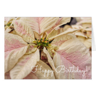 Pink Poinsettia December Birthday Card