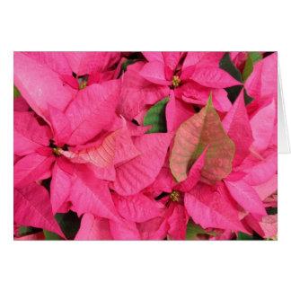 Pink Poinsettia Flower Christmas Card
