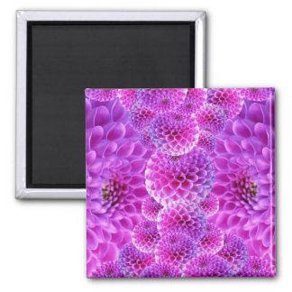 Pink PomPom Dahlia Flowers Refrigerator Magnets