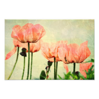 Pink Poppies and Floral Swirls Photographic Print