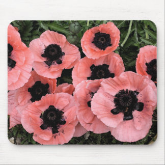 Pink poppies mouse pad