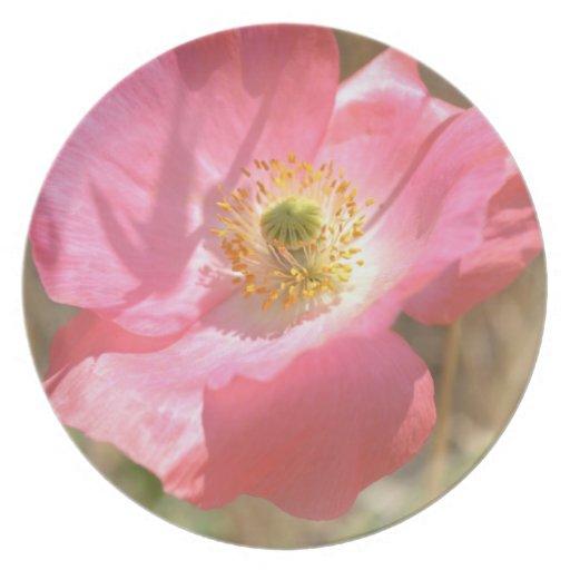 Pink Poppy Flower Plate