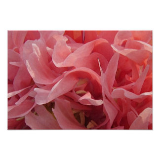 Pink Poppy Petals Poster