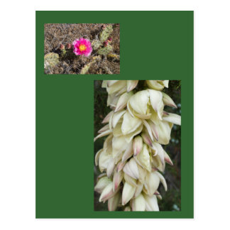 Pink Prickly Pear Flower Gift Postcards