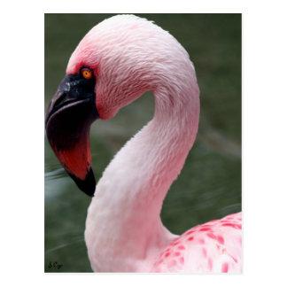 Pink Profile Postcard