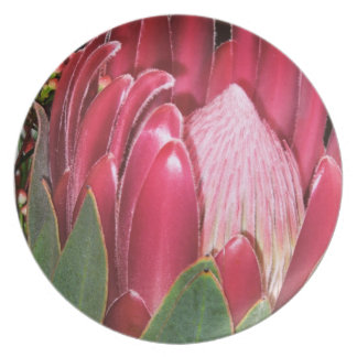 Pink Protea Flower Party Plate