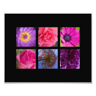 Pink & Purple Flowers Photographic Print