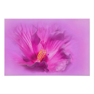 Pink purple Hibiscus flower Poster