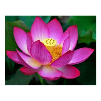 Pink Purple Lotus Flower Blank Floral Postcard