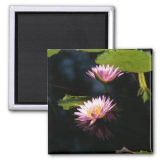 Pink Purple Lotus Waterlilies magnet