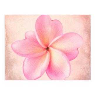 Pink Purple Plumeria Flower Pink Background Postcard
