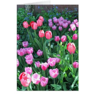 Pink Purple Springtime Spring Tulips Flower Floral Card