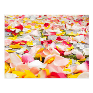Pink Red and Yellow Rose Petals Postcard