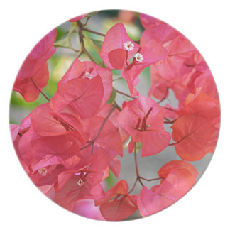 Pink red bougainvillea flowers plate