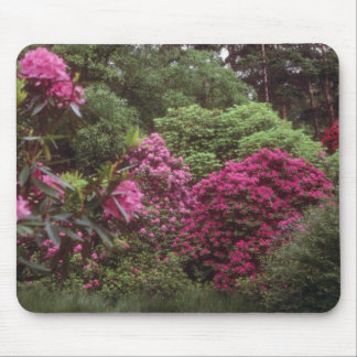 Pink Rhododendroms, Brickhill Woods flowers Mouse Pad