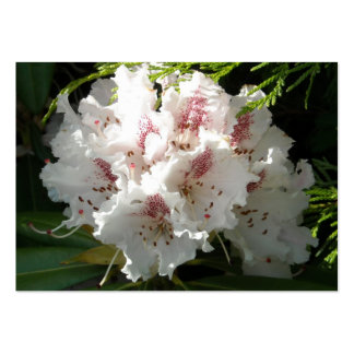 Pink Rhododendron and Cedar Sprigs Pack Of Chubby Business Cards