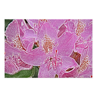 Pink rhododendron blossom poster