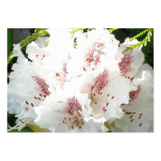 Pink Rhododendron Flower Closeup in Cedar Business Cards