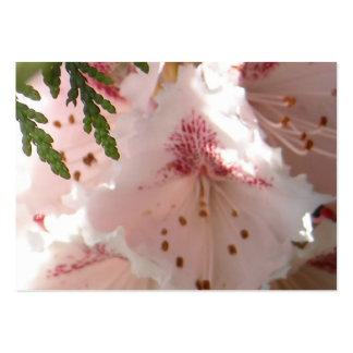 Pink Rhododendron Flower in Cedar Business Card