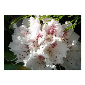 Pink Rhododendron Flower in Cedar Business Card